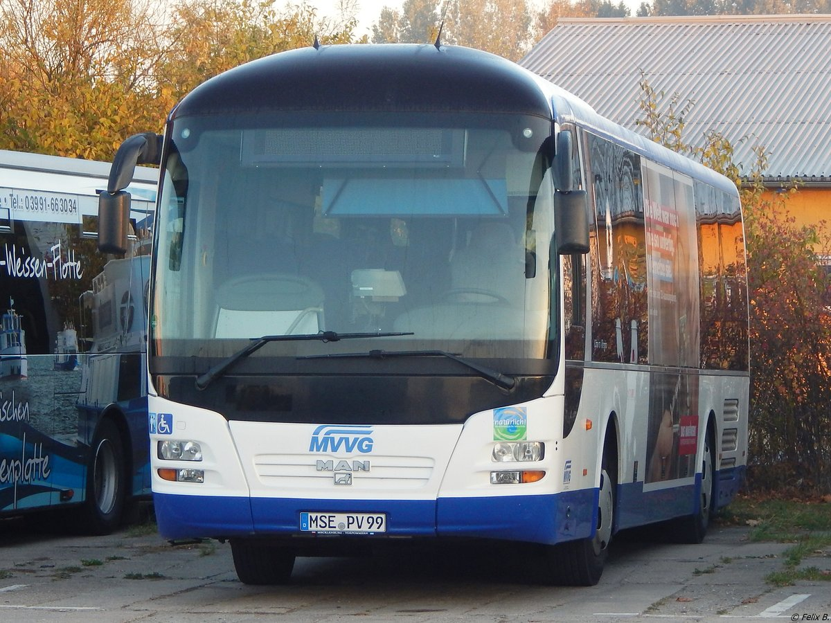 MAN Lion's Regio der MVVG in Neubrandenburg am 12.10.2018