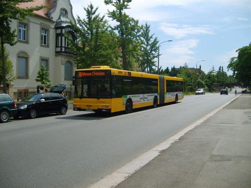 man ng 313 der dvb auf der linie 75 nach messe dresden bus. Black Bedroom Furniture Sets. Home Design Ideas